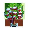 Snow Cherry Tree